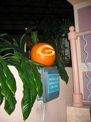UGA Pumpkin