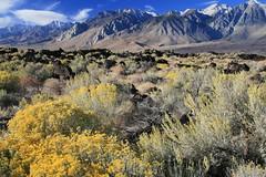 Cerro Gordo Buttermilk 233 (Steve Perdue) Tags: fallcolor 395 easternsierra