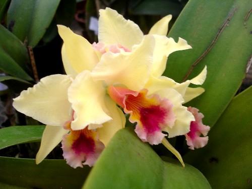Orquídea. por Aneleh_.