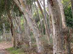 Santa Catalina 2006 (74) (Kevin.Souza) Tags: santacatalina