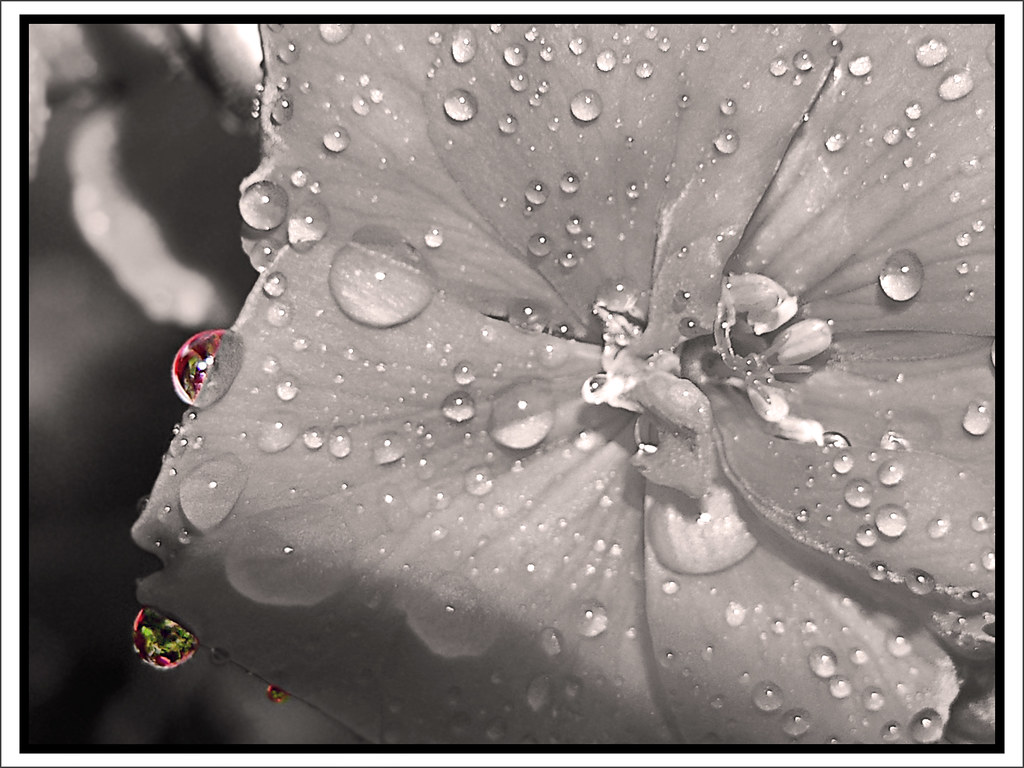 Special Droplets of Color