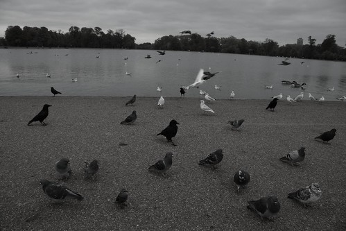 Birds in Hyde Park