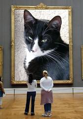 "brutus in ""museum""....! (Grandma Tina) Tags: white black museum kitty tuxedo frame"
