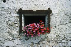 Bouquet (Walter Quirtmair) Tags: flowers film window facade austria august 2006 carinthia bouquet takenbywalter weissensee eos300