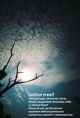 cotton tree!! (Savar, Dhaka, Bangladesh) (Ideas_R_Bulletproof) Tags: sky cloud moon tree silhouette night bravo long exposure cotton dhaka bangladesh 24mmf28af jahangirnagar