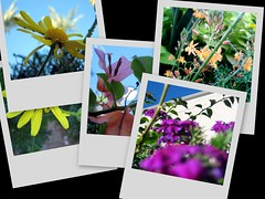 picture pile- flowers
