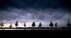 The gathering (Harry Mijland) Tags: lake holland bravo meer utrecht nederland urbannature nl alpha a100 loosdrechtseplassen maarssen loosdrecht tienhoven dearharry urbannatureblog destrook harrymijland