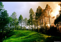 Alpine meadow in spring (jkairvar) Tags: india green clouds pines uttaranchal specnature meadowalpine