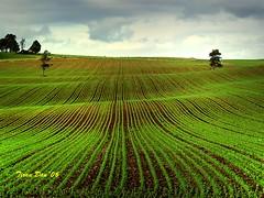 A Maizing Day (Catching Magic) Tags: newzealand green landscape corn farm olympus waikato e300 tiraudan seedlings maize specnature