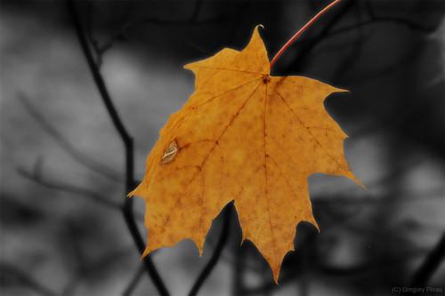 The Leaf Cutout - Magic of Autumn