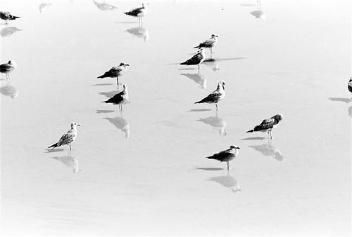 seagulls stuck in ice