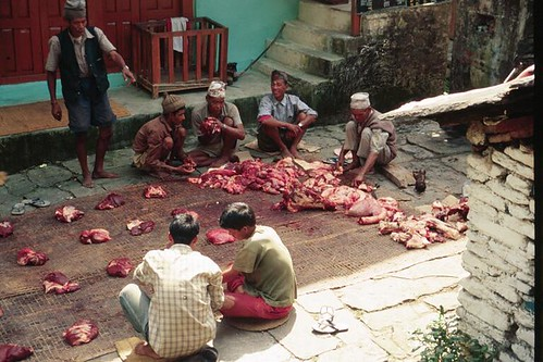 230S-Trek-BuffPortions!