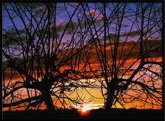 Is this Love? (Silvia de Luque) Tags: blue sunset red sun tree love sol silhouette yellow azul atardecer rojo bravo amarillo granada rbol silueta lazubia ofy 123sky alhambra2006 silviadeluque abigfave photofans qstm ckjm