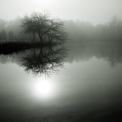 (bikeracer) Tags: park trees blackandwhite sun mist lake reflection tree water fog 1025fav pond quiet nebbia interestingness163 i500 chromatoned explore26nov06