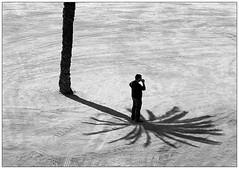 #3 (Siegfried Hansen) Tags: barcelona street shadow bw tree men sand streetphotography palm streetphoto mann smoker schatten palme baum schwarzweis siegfriedhansen streetfotografie strassenfotograf germanstreetphotography germanstreetphotographer deutschestreetfotografie deutscherstrassenfotograf