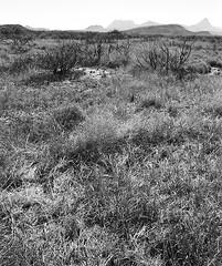 grass lands (clickykbd) Tags: ranch blackandwhite bw film canon landscape mono blackwhite texas desert property delta hills terlingua clickykbd 100 a1 manual draw westtexas illford northcorazones sopahide