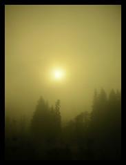 Eerie... (~Dezz~) Tags: trees sun mist nature fog forest landscape nikon eerie mysterious borders drivebyshooting
