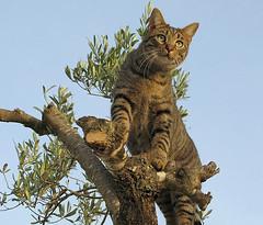 Moix's lookout (Marlis1) Tags: españa cats pets wow spain bravo 100vistas outstandingshots mywinners abigfave 3030300 impressedbeauty