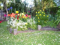I like the daisies in the lawn (Monica Morgan) Tags: mower englishdaisies