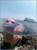 model in red sea (Fiona Ayerst) Tags: portrait green costume snorkel arty redsea egypt 2006 specialeffects overunder swimmingcostume mercia freediver snorkeller scubapro d100nikon cozzie verticalanimal seaseastrobes90s coralprincessboat liveaboardliving unusualeffect