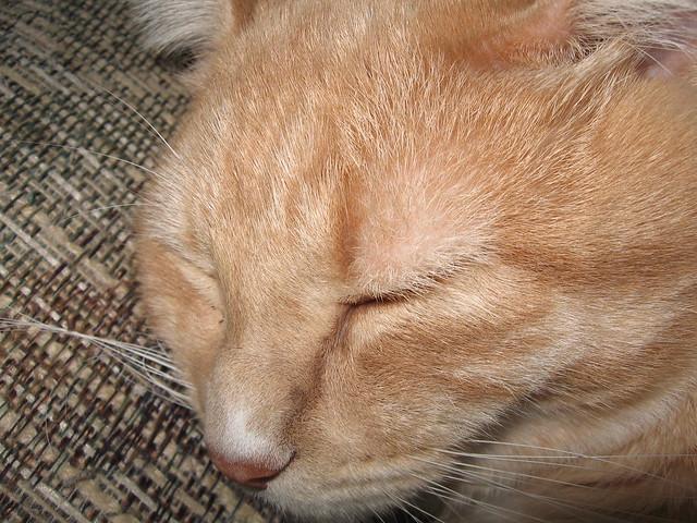 Snoozing Kodos