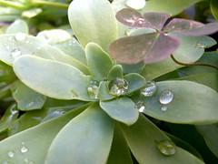 flower closeup after the rain