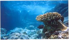 964390_38.jpg (Vilhelm Sjostrom) Tags: desktop wallpaper nature coral geotagged thailand underwater snorkel dive scuba diving snorkeling reef mustavalkoinen mukohsimilan similan4 kohmiang kohmyang helpusprotectourreefs cvilhelmsjstrm wwwmustavalkoinenfi