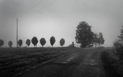 Tennessee Wanderer (nailbender) Tags: road morning bw horse mist fog ilovenature friend farm alabama rual blountcounty nailbender tennesseewanderer jdmckinnon