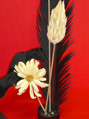 Study in Black, Red, And White (wolfbayplayer) Tags: red white black whiteflower feather blackfeather