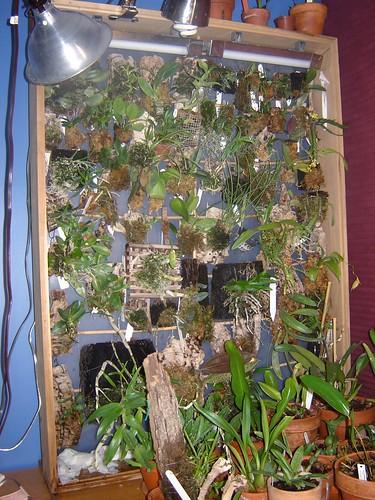 Блоки для орхидей