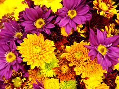more flowers, but i think you can handle it. (Esther17) Tags: red orange yellow way purple supermarket noway utata bouquet yella onflickr