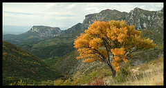Foret de Saou, un arbre dor... / Soau forest, a golden tree... (Laurence TERRAS) Tags: autumn cliff mountain france mountains tree nature yellow jaune montagne automne landscape europe panoramic explore 100views 200views paysage arbre drome bourdeaux falaises montagnes saou