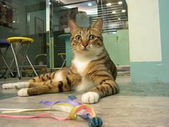 Jacky (jacky elin) Tags: cats brown cat mix tabby jacky