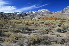 Cerro Gordo Buttermilk 246 (Steve Perdue) Tags: fallcolor 395 easternsierra