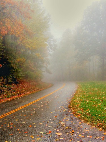 Into the Autumn Fog