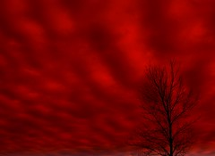 Blood Red Sky (Micky**) Tags: red sky tree nature beauty minnesota silhouette clouds micky picasa tint explore outstanding explored outstandingshots bronly theworldthroughmyeyes zlimen