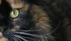hiding (My Baby Mia) Tags: portrait nature cat kittens hiding catseye mnfg miadefleur