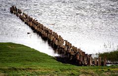 breaker wood (beta karel) Tags: sea nature denmark culture 2006 wad rm betakarel betakarel