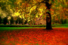 Hydref yn Llandyfriog - Autumn in Llandyfriog (brynmeillion - JAN) Tags: autumn tree church bravo shot group elegant outstanding dail hydref coeden eglwys thecontinuum outstandingshots llandyfriog abigfave 5for2 outstandingshotshighlight ci33 anawesomeshot bratanesque colourartaward thegoldenmermaid