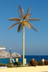 Yellow Palm, Rhodes (Mac ind Óg) Tags: autumn holiday tree yellow greece rhodes ρόδοσ elláda ελλάδα ελλάσ