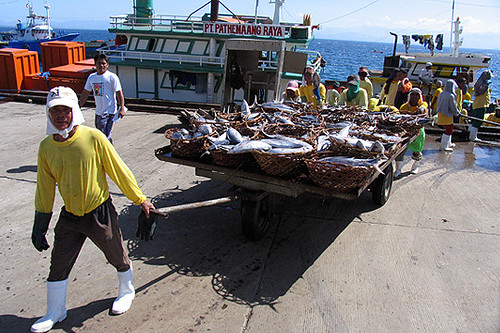 Philippinen  菲律宾  菲律賓  필리핀(공화국) Pinoy Filipino Pilipino Buhay  people pictures photos life man,  Philippines, rural, seafood, seaside, working fishworkers fish port workers loading unloading General Santos Fish Port, South Cotabato boat