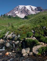 Paradise, Mt. Rainier Photo