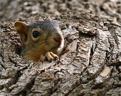 [フリー画像] [動物写真] [哺乳類] [小動物] [リス科] [リス]      [フリー素材]