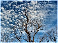 Fall(en) (BehindBlueEyes) Tags: november sky tree clouds newjersey branch nj barren somersetcounty franklintownship