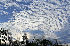 Path of Clouds [..Chuadanga, Bangladesh..] (Catch the dream) Tags: flower macro nature clouds fly wildlife bongo bengal bangla bengali bangladeshi bangali catchthedream gettyimagesbangladeshq2