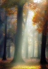 Heavenly (Zsaj) Tags: morning autumn trees light fall sunshine woods maryland rays sunrays themagicwood