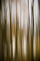 MORNING FOREST IN MOTION