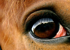 I Wait. (Raychel Mendez) Tags: blue horse detail reflection eye wow hit bravo outstanding precise