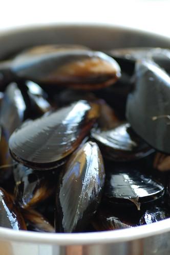 tassie mussels