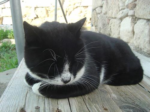 osman artık ünlü bir kedi! :)
